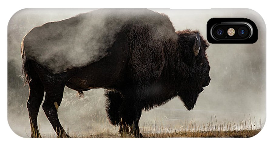 Adam Jones IPhone X Case featuring the photograph Bison In Mist, Upper Geyser Basin by Adam Jones