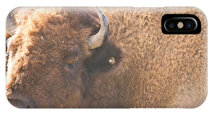 Bison Photographs IPhone X Case featuring the photograph Bison Lick by Vernis Maxwell