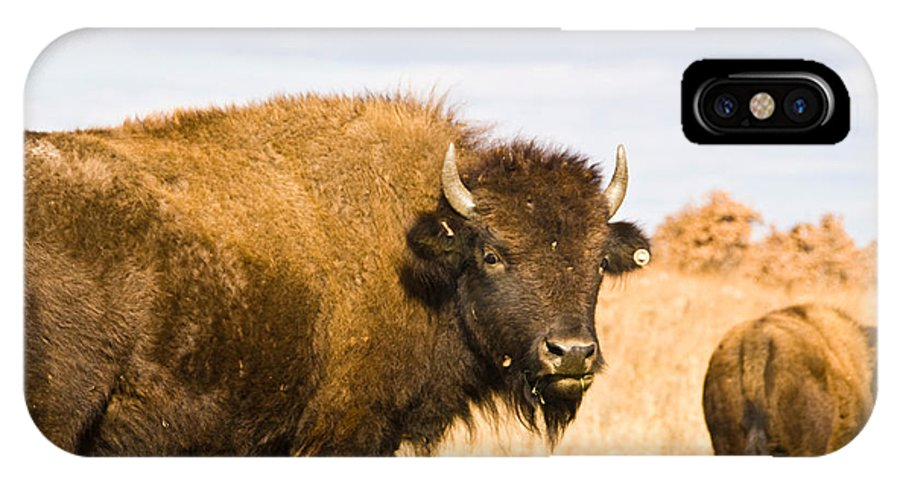 Bison Photographs IPhone X Case featuring the photograph Bison On Tall Grass Iv by Vernis Maxwell