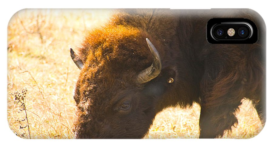 Bison Photographs IPhone X Case featuring the photograph Bison Wander by Vernis Maxwell