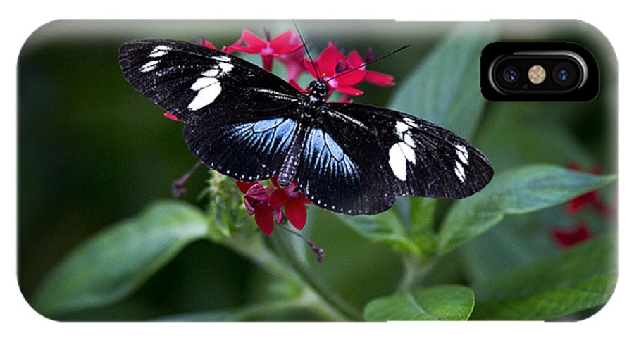 Butterfly IPhone X Case featuring the photograph Black And Blue Butterfly by Vanessa Valdes