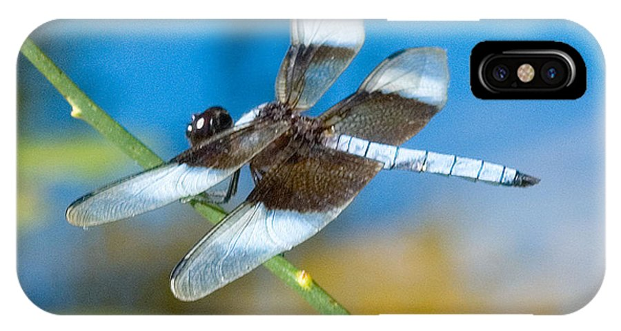 Black & White Dragonfly Photograph IPhone X Case featuring the photograph Black And White Dragonfly by Mae Wertz