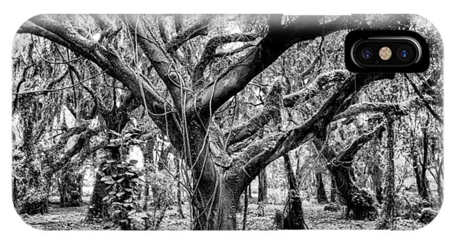 Uncultivated IPhone X Case featuring the photograph Black And White Maui Tree by Robert Aycock