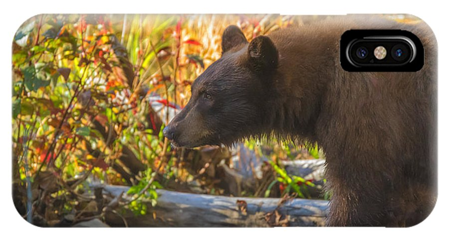 Black Bear Autumn IPhone X Case featuring the photograph Black Bear Autumn by Mitch Shindelbower