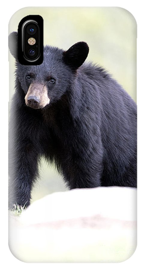 Black Bear IPhone X Case featuring the photograph Black Bear Cub by Deby Dixon