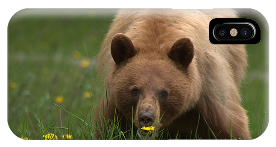 Bear IPhone X Case featuring the photograph Black Bear by Frank Madia