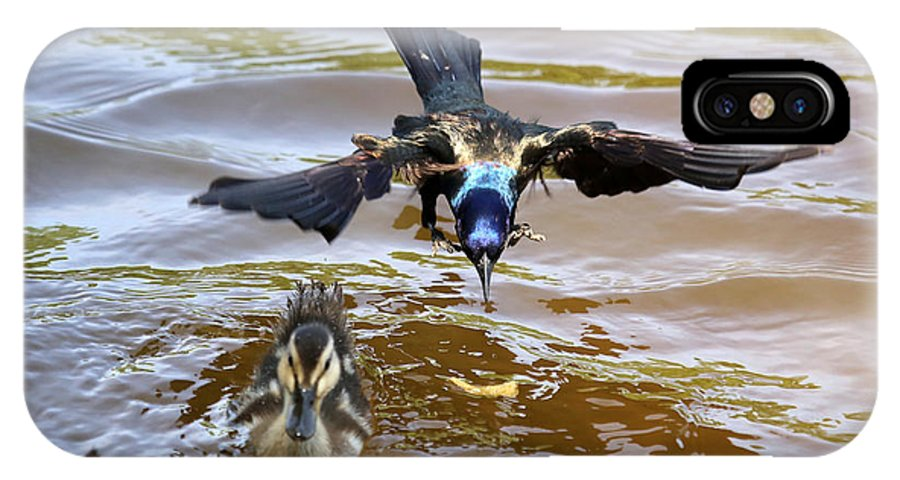 Bird IPhone X Case featuring the photograph Black Bird On The Water by Dwight Cook