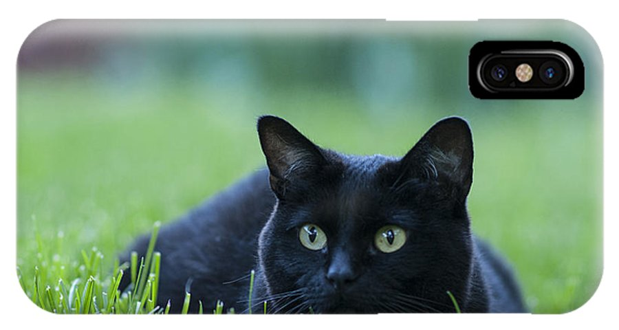 Animal IPhone X Case featuring the photograph Black Cat by Juli Scalzi
