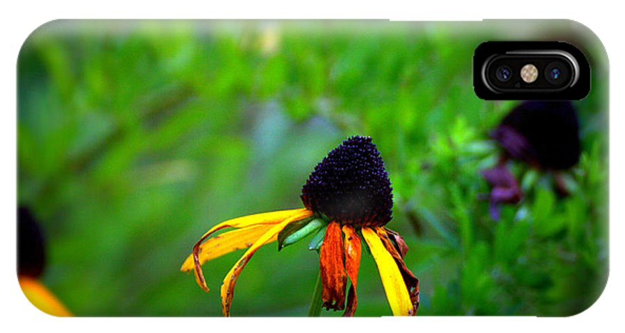 Black Eye Susan IPhone X Case featuring the digital art Black Eye Susans by Brian Schultz