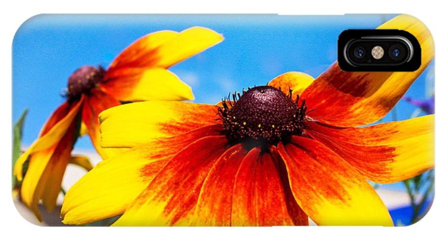 Black Eyed Susan IPhone X Case featuring the photograph Black Eyed Susan by Catherine Snowden