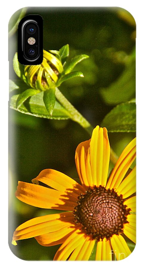 IPhone X Case featuring the photograph Black Eyed Susan by Debara Johnson