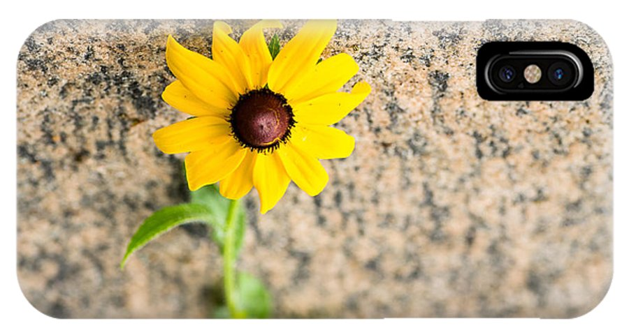 Susan IPhone X Case featuring the photograph Black-eyed Susan Flower On A Gneiss Rock by Les Palenik