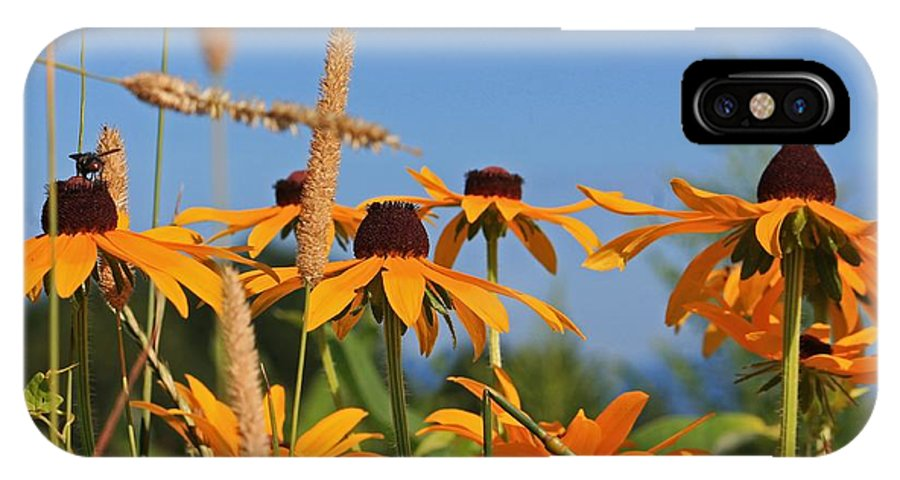 Wild Flowers IPhone X Case featuring the photograph Black Eyed Susan by Michael Saunders