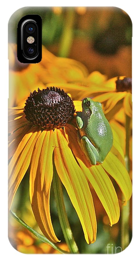 IPhone X Case featuring the photograph Black Eyed Susan Tree Frog II by Debara Johnson