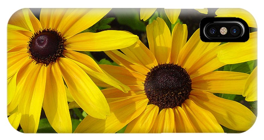 Black Eyed Susan IPhone Case featuring the photograph Black Eyed Susans by Suzanne Gaff