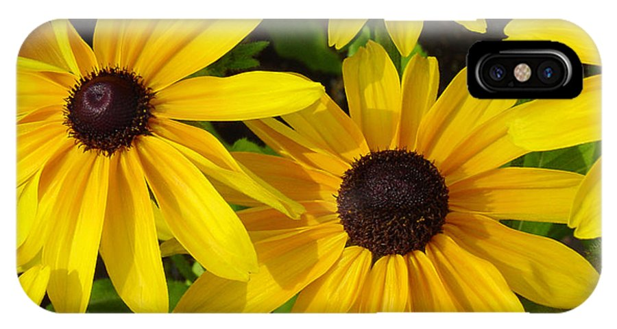 Black Eyed Susan IPhone X Case featuring the photograph Black Eyed Susans by Suzanne Gaff