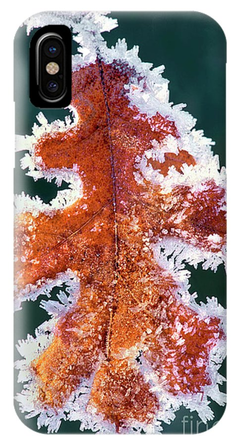 North America IPhone X Case featuring the photograph Black Oak Leaf Rime Ice Yosemite National Park California by Dave Welling