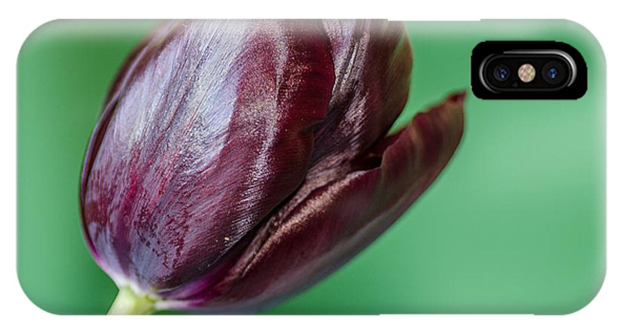 Black Tulip IPhone X Case featuring the photograph Black Tuip by Martina Fagan