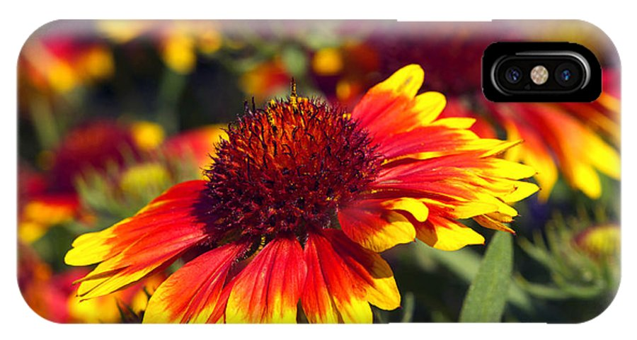 Blanket Flower IPhone X Case featuring the photograph Blanket Flower by Sharon Talson