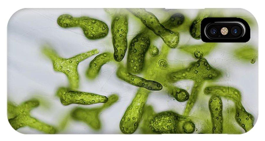 pick up a5479 38010 Blastophysa Marine Green Alga IPhone X Case