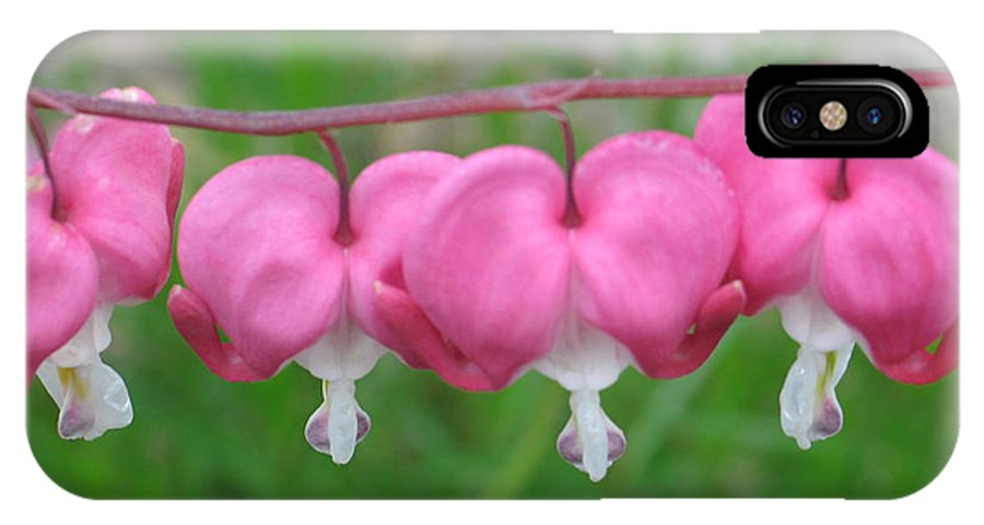 Flowers IPhone X Case featuring the photograph Bleeding Hearts by Victoria Dauphinee