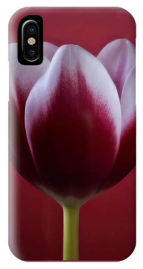 Flowers IPhone X Case featuring the photograph Abstract Red White Flowers Tulips Macro Photography Art by Artecco Fine Art Photography