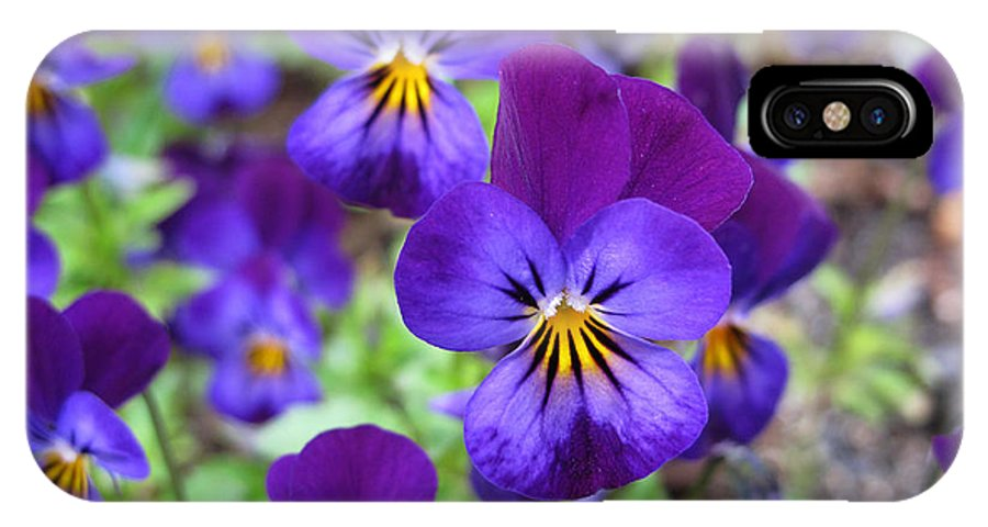 Flower IPhone X Case featuring the photograph Bloom Purple Violets by Debra Schwab