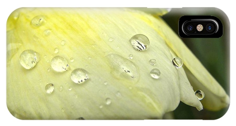 Daffodil IPhone X Case featuring the photograph Blooming Daffodil With Raindrops by Tisha Clinkenbeard