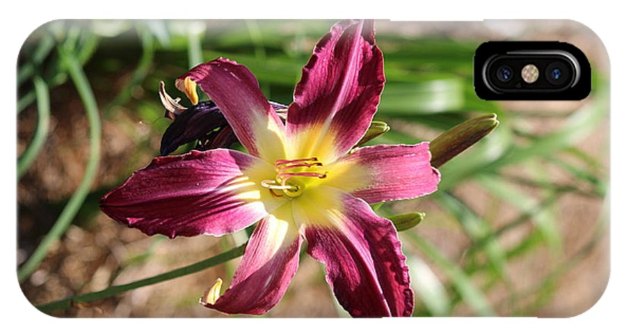 Lily IPhone X Case featuring the photograph Blooming by Evelyn Haye