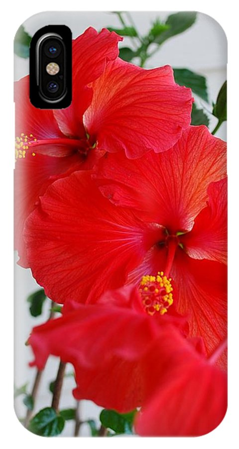 Hibiscus IPhone X Case featuring the photograph Blooming Hibiscus by Mary Griffin