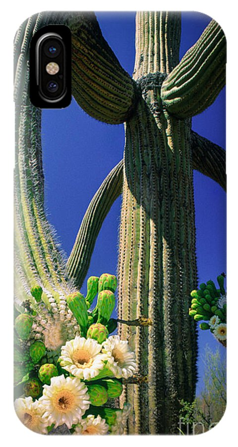 America IPhone X Case featuring the photograph Blooming Saguaro by Inge Johnsson
