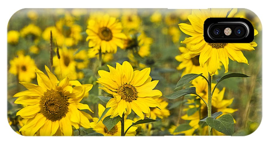 Nature IPhone X Case featuring the photograph Blooming Sunflower by Heiko Koehrer-Wagner