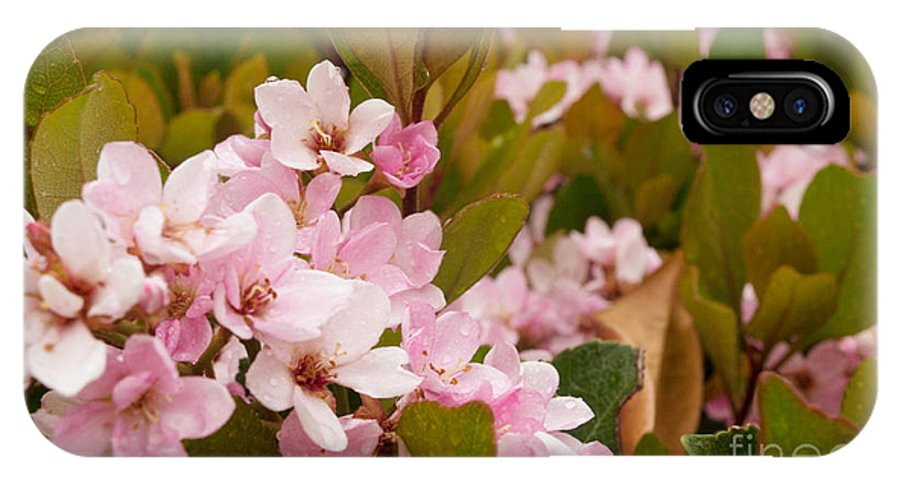 Pink IPhone X Case featuring the photograph Blossoms Of The Rain 2 by Rima Biswas