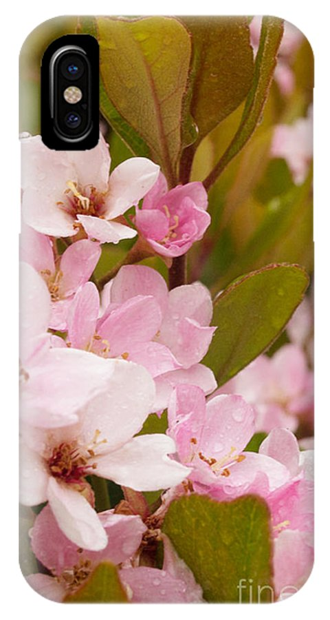 Pink IPhone X Case featuring the photograph Blossoms Of The Rain by Rima Biswas