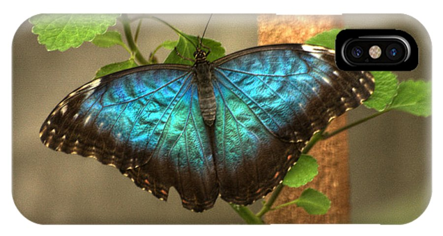 Butterfly IPhone X Case featuring the photograph Blue And Black Butterfly by Jeremy Hayden