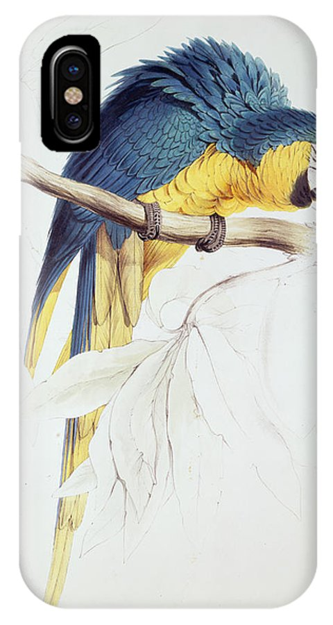 Parrot IPhone X Case featuring the painting Blue And Yellow Macaw by Edward Lear