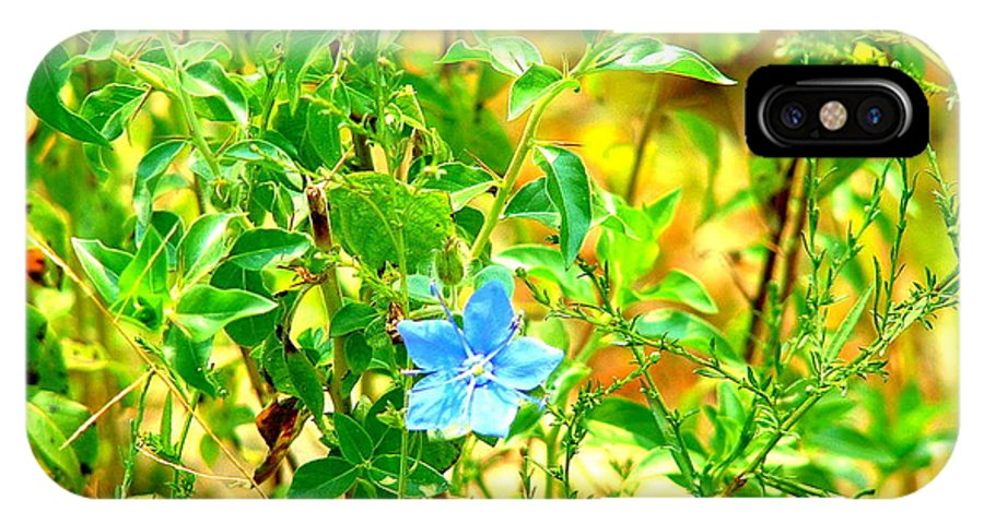 Flowers IPhone X Case featuring the photograph Blue Belle by Darrell Clakley