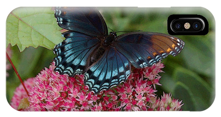 Blue IPhone X Case featuring the photograph Blue Butterfly by Suzanne Gaff