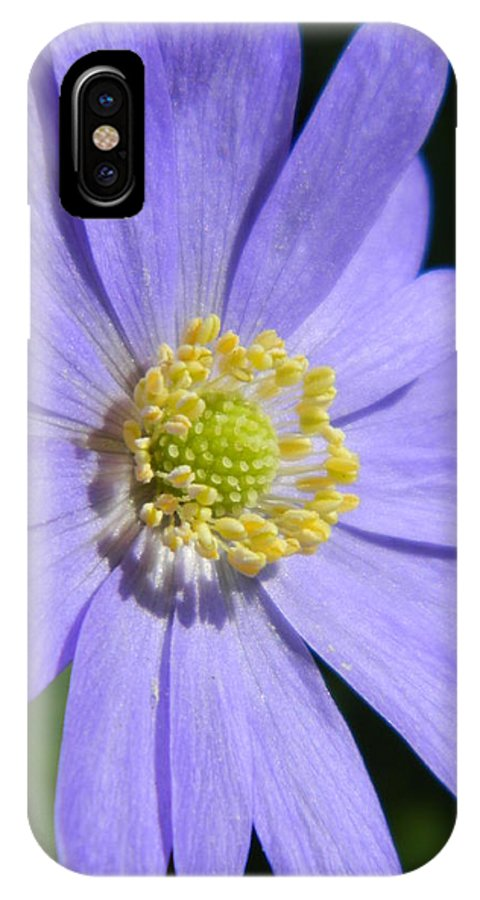 Blue. Daisy. Flower IPhone X Case featuring the photograph Blue Daisy Up Close by Nicki Bennett