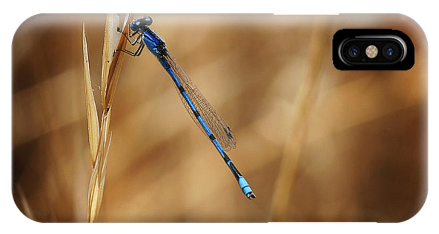 Insect IPhone X Case featuring the photograph Blue Damsel by Robert Woodward