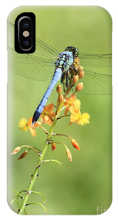 Dragonfly IPhone X Case featuring the photograph Blue Dragonfly On Yellow Flower by Carol Groenen