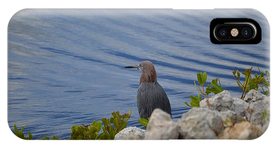 Chicago Bears IPhone X / XS Case featuring the photograph Blue Heron 1 by Jimi Bush