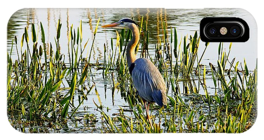 Blue Heron Backside IPhone X Case featuring the photograph Blue Heron Backside by William Bosley
