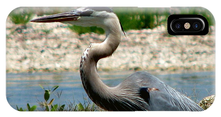 Art For The Wall...patzer Photography IPhone X Case featuring the photograph Blue Heron by Greg Patzer