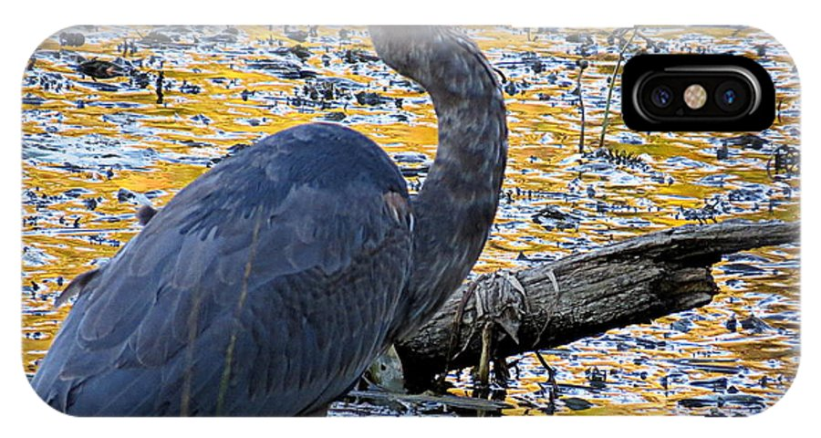 Bird IPhone X Case featuring the photograph Blue Heron Naturally by Laura Louise