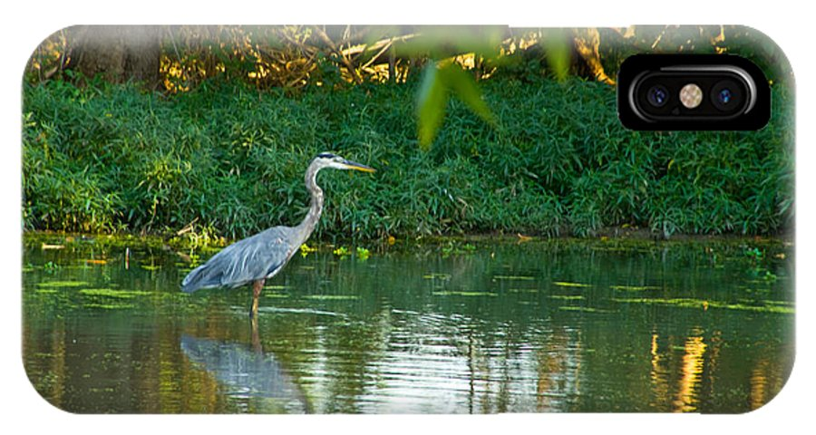 Tulsa Photographs IPhone X Case featuring the photograph Blue Heron Reflection by Vernis Maxwell