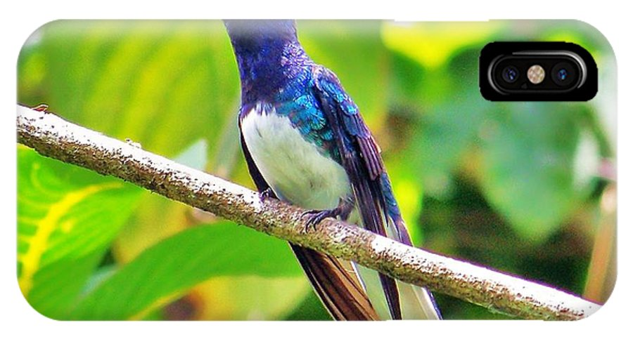 Birds IPhone X Case featuring the photograph Blue Humming Bird by Al Fritz