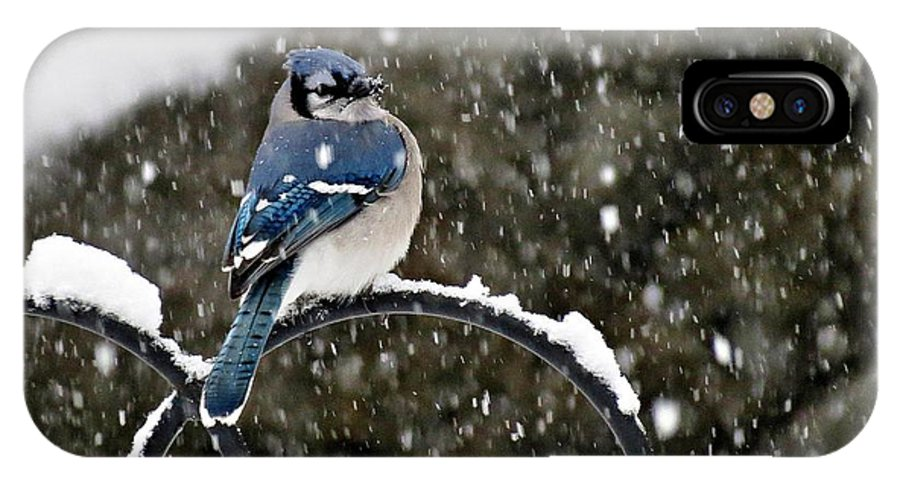 Blue IPhone X Case featuring the photograph Blue Jay In Snow Storm by MTBobbins Photography