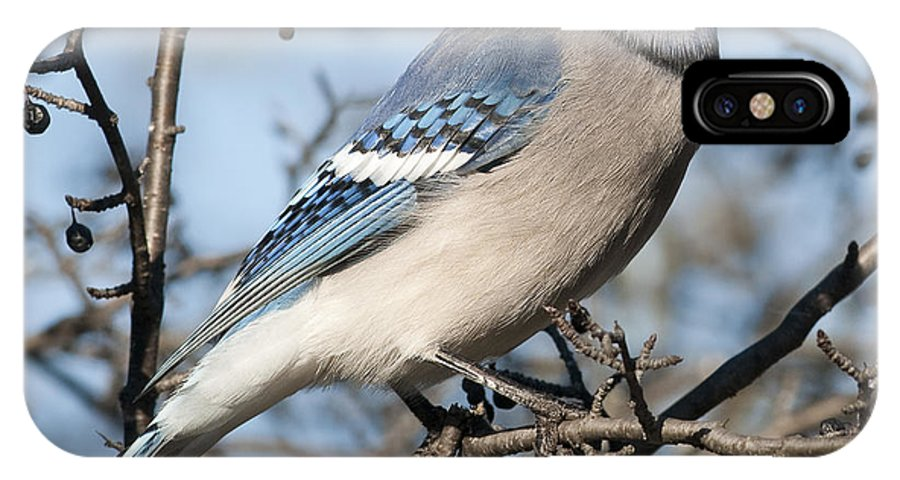 Festblues IPhone X Case featuring the photograph Blue Jay.. by Nina Stavlund