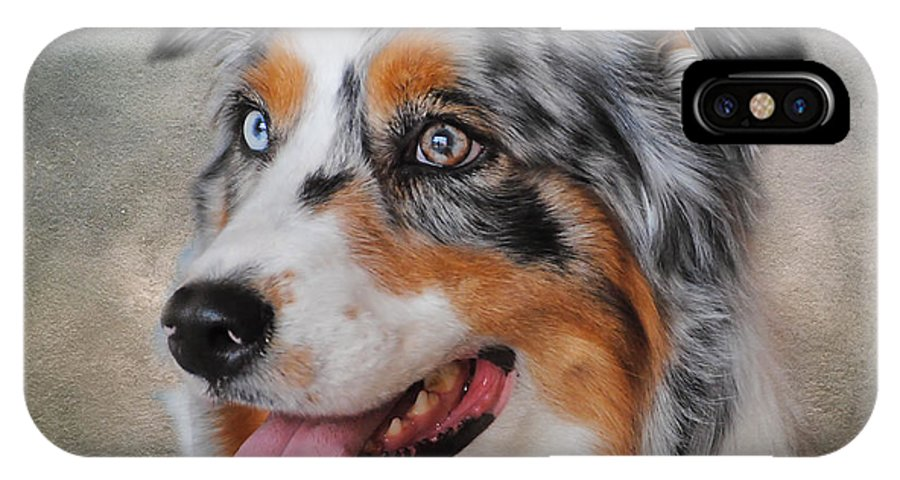 Animal IPhone X Case featuring the photograph Blue Merle Australian Shepherd by Jai Johnson